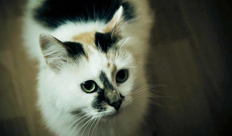 шерсть, кот, глаза, взгляд, морда, усы,