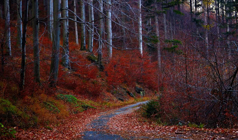 осень, лес, листья, деревья, дорога, природа, красные,