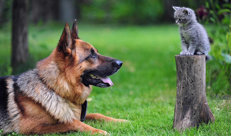 собака, кот, собаки, собак,