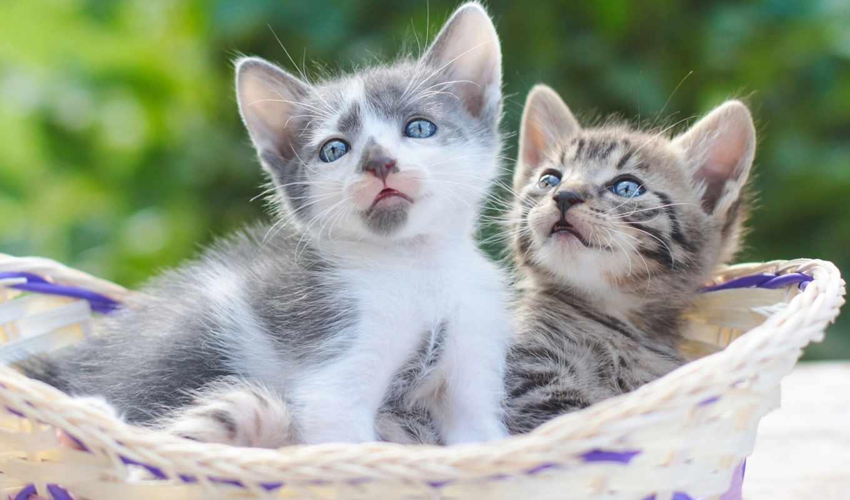 кошки, котята,