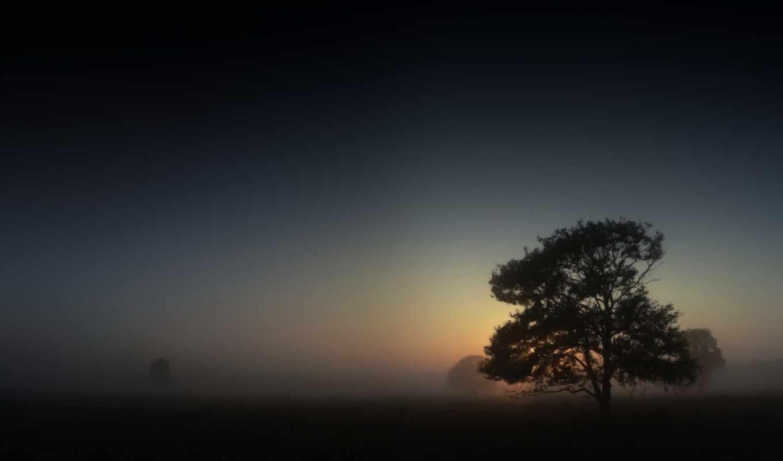 туман, утро, картинка, дерево, ночь, купить,