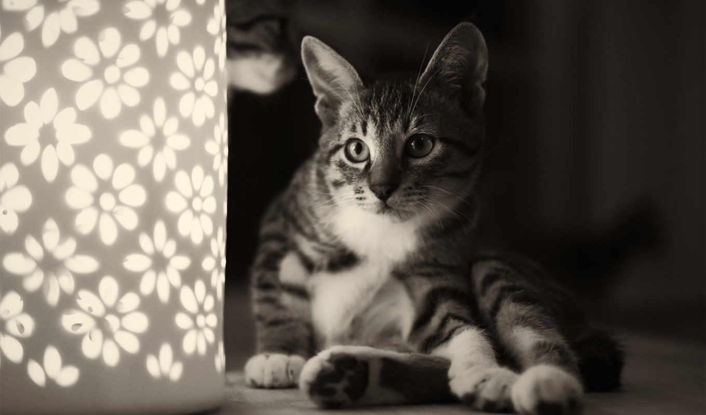 кот, животные, игры, котята, белое, чёрно, цветы, загрузок, нов, только,