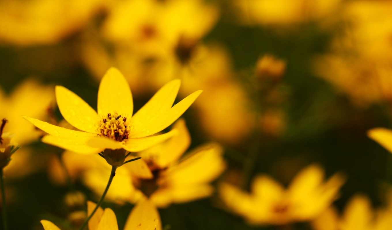 цветы,