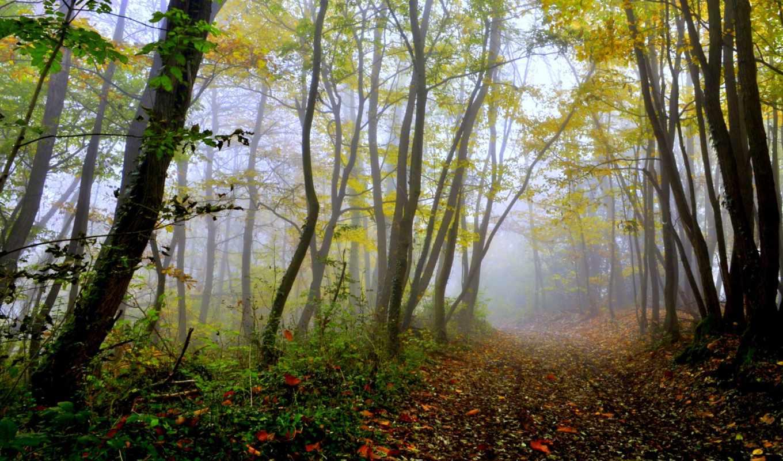 осень, лес, дорожка, деревья,