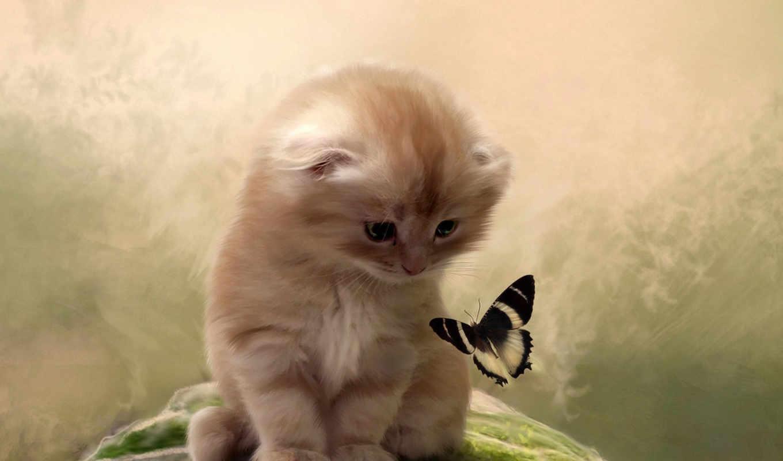 котенок, бабочка, кот, внимание, картинка, картинку,