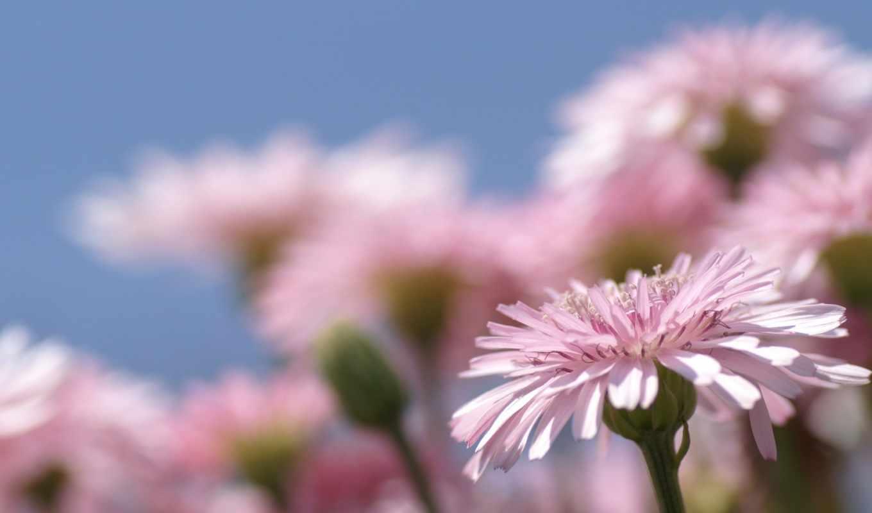 цветы, марта,