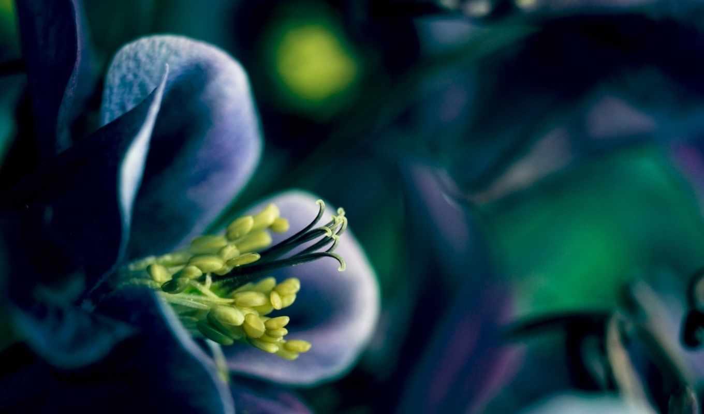 цветы, волшебные, марта, растение, кошачьи, дракон, глаза, цветение, эти,