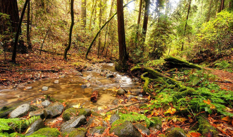 ручей, лесу, лес, картинка, осеннем, гора, опубликовано, камни,
