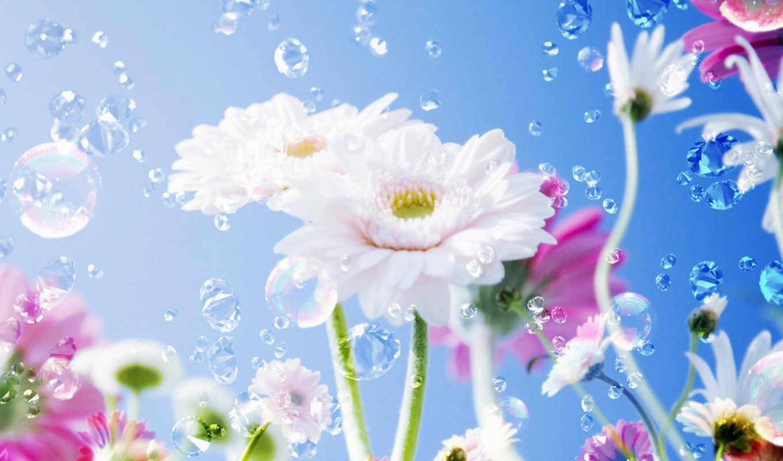 цветы, праздник, женщин, капли, небо,