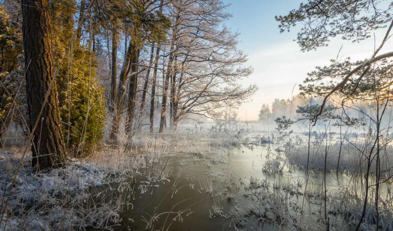 весна, лес, oir, winter, снег, дерево