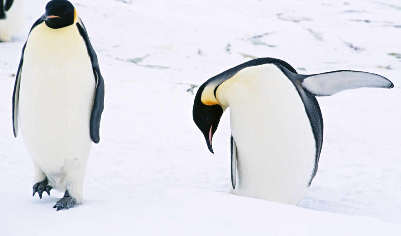 close, animal, up, животные, size, æó, код, nl, маленький, wallzilla, пингвин, item, link, pingüinos, download,