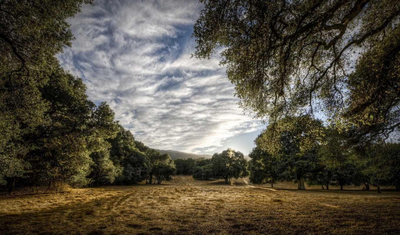 природа, фото, обои, столе, деревья, рабочем, ваше