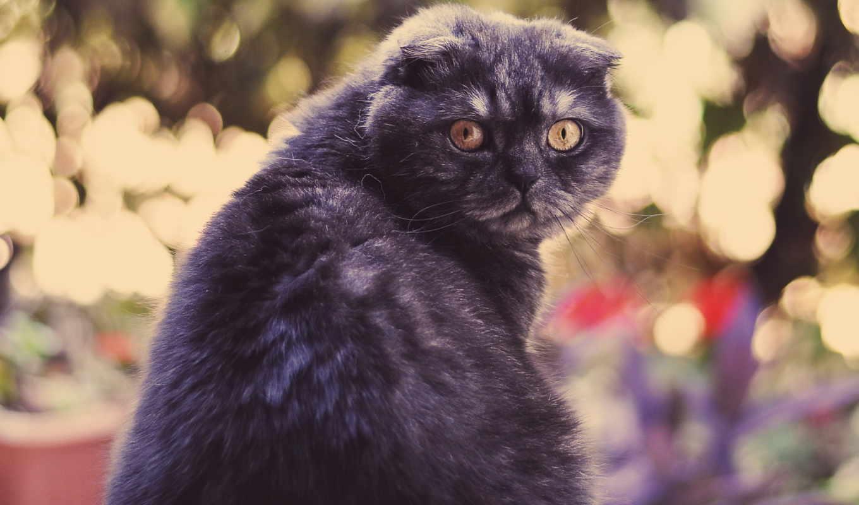 кот, кошки, густой, морда, животные,