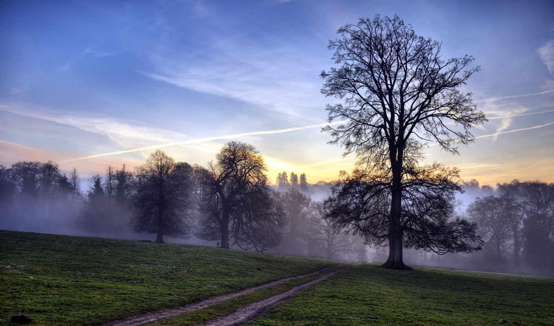 туман, лес, дорога, лесу, природа, поле, рассвет, деревья,