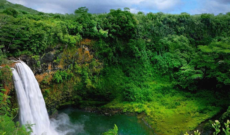 природа, деревья, лес, водопад, растительность,