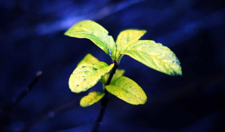 макро, фотографии, фона, украшения, синий, листочки, растение, зелень, природа,