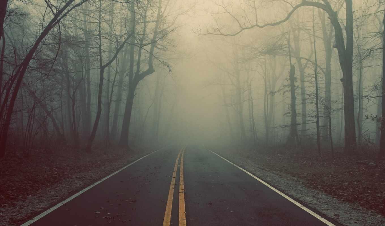 дорога, лес, туман, деревья, трасса, картинка,