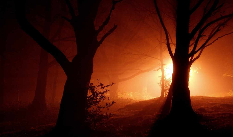 landscape, лес, ночь, свет, деревья, огни, природа,