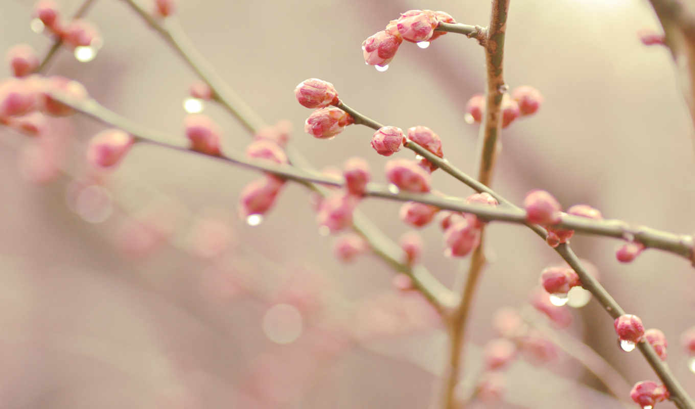 весна, bokeh, почки, капли,