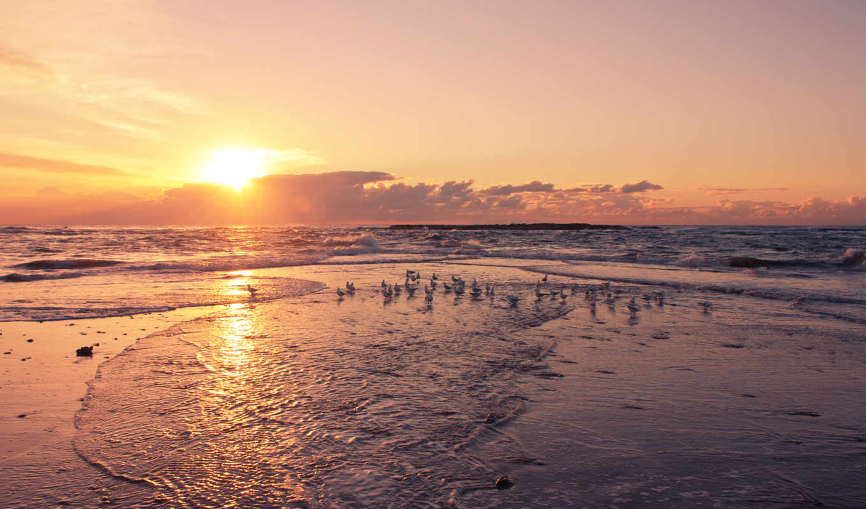 закат, birds, берег, пляж, море, free, ocean, gulls,