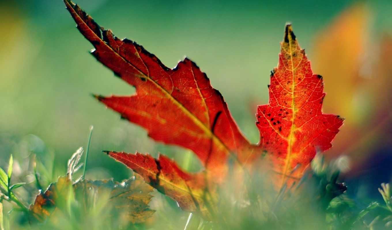 desktop, leaf, free, resolution, high, image, nature, large, green,