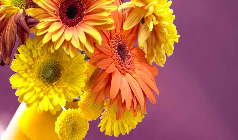 цветы, разрешениях, разных, очень, ozoda,