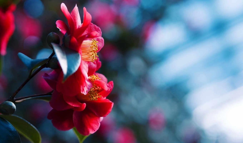 цветы, качества, full,