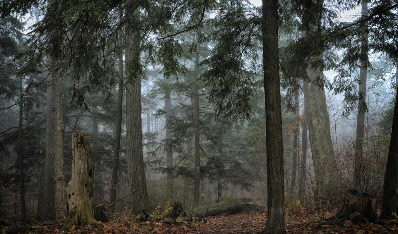 красивые, коллажи, друзей, лес, забавные, осень,