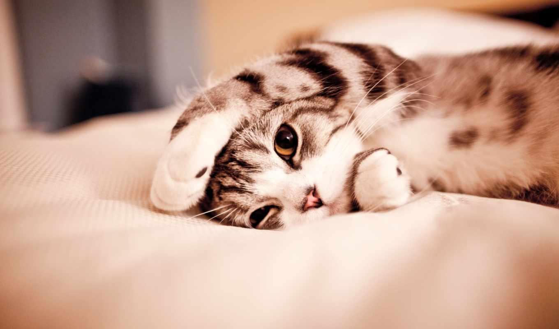 , кот, котик, лежит, глаза, лапки,