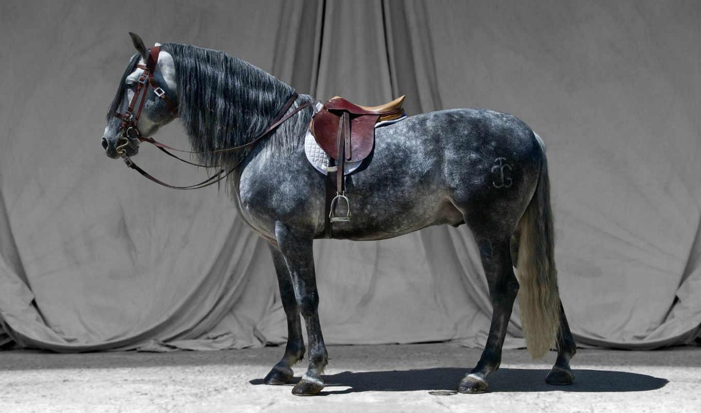 joão, седло, free, desktop, animals, лошадь, фон, серый,