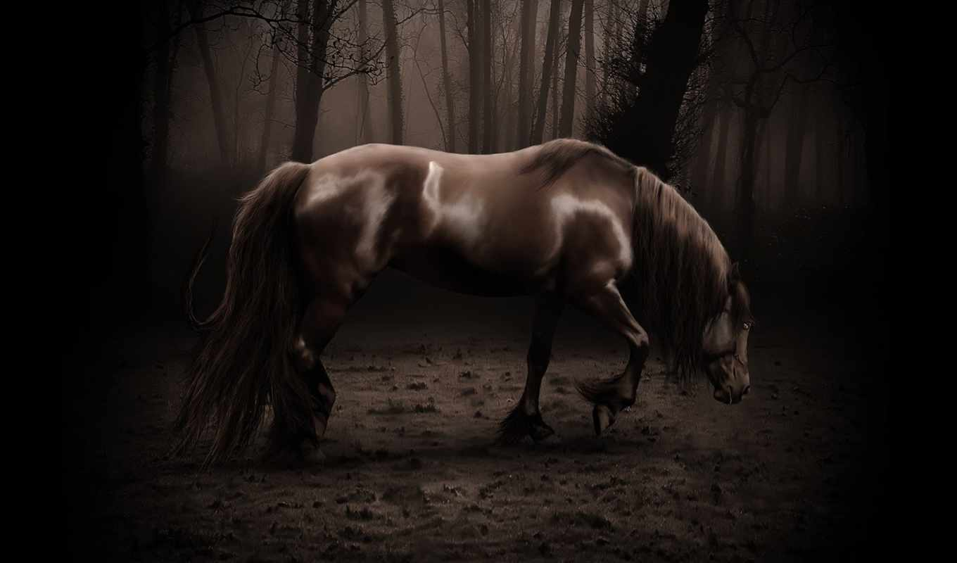 horse, dark, wallpaper, free, download, and, the,