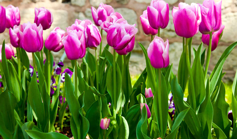 весна, природа, цветы,