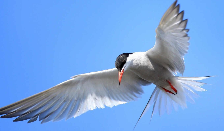 flying, quotes, birds, небо, об, полет, цитата, fly, live,
