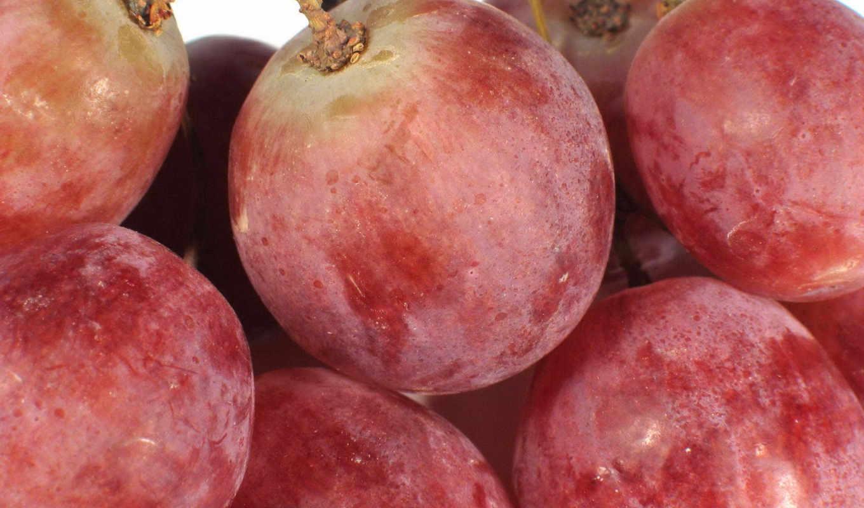 ,, фрукты, производить, пища, природные продукты, seedless fruit, Плумкот, berries, виноград, varenye,
