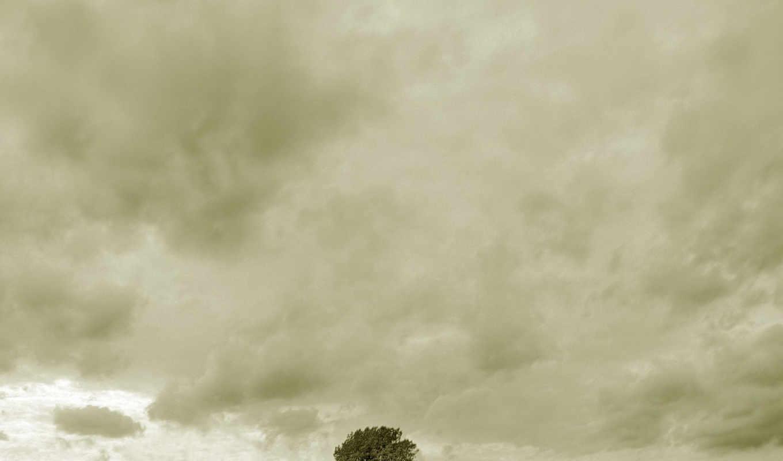 дерево, человек, грусть,