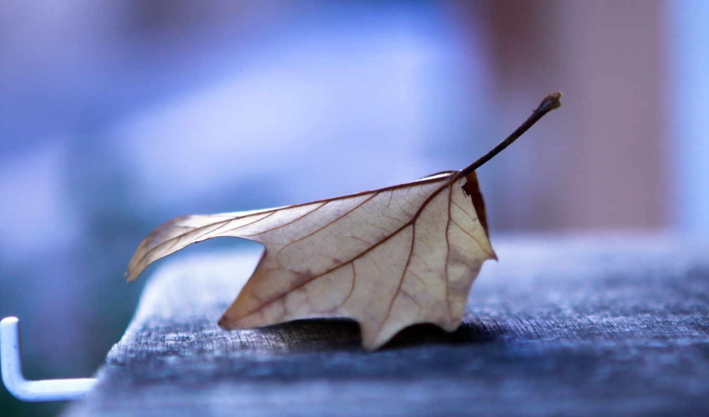 осиновый, лист, скамейка, вечер,