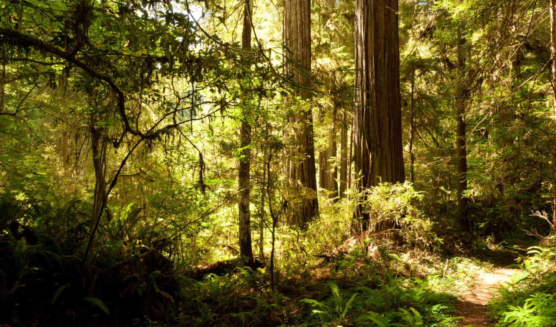 природа, usa, деревя, леса, калифорния, осень, камни, floresta, сады, cliff, mist,