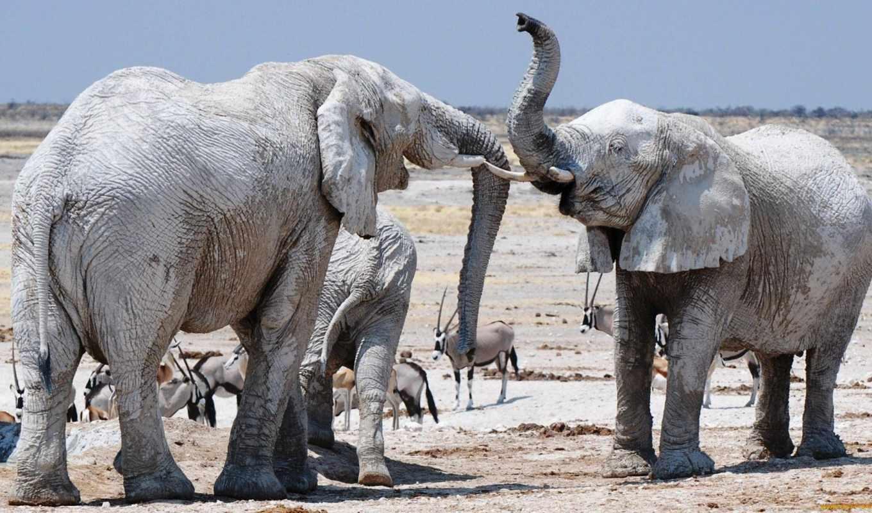 слон, их, own, images,