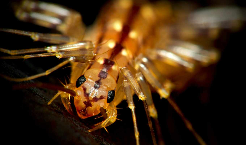 centipede, house, опубликовано, knife,