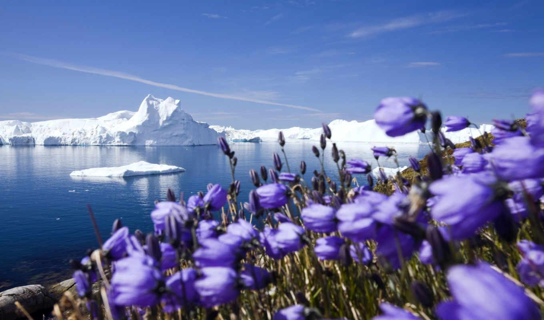 цветы, подснежники, весна, весенние, winter, liveinternet,