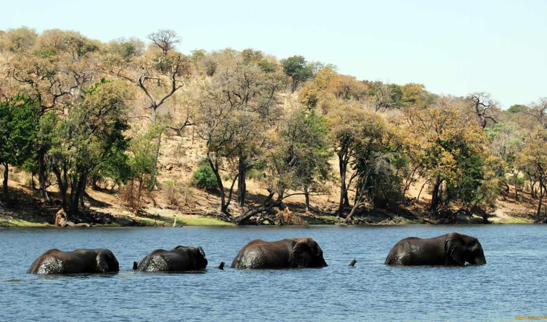 животные, animals, слоны, янв,