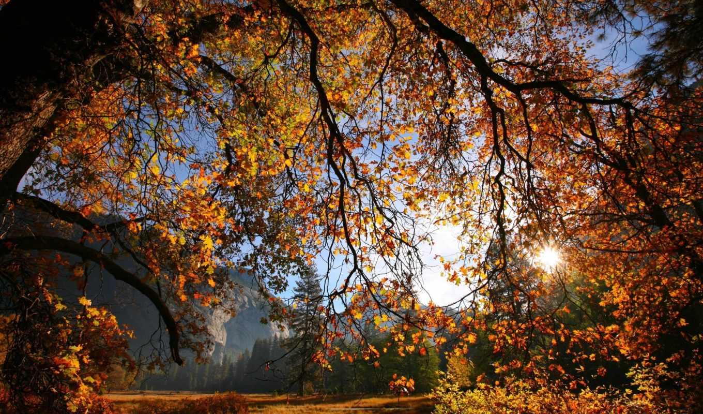 осень, природа, листья, ветки, дерево, sun,
