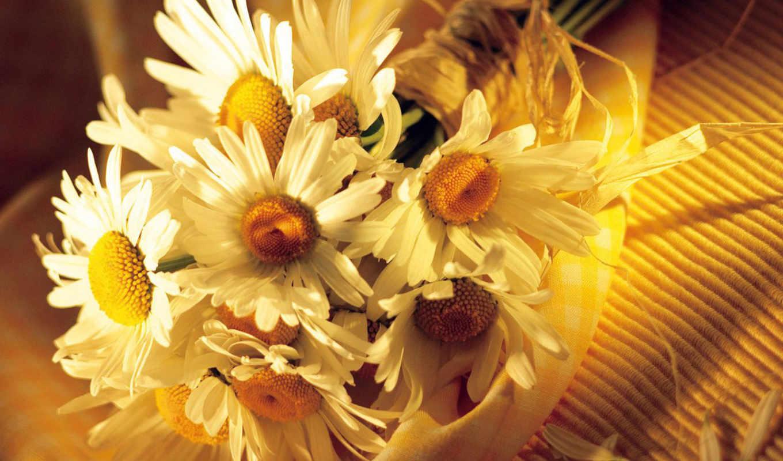 природа, красивые, бесплатные, цветы, природы,