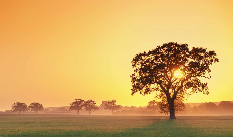 дерево, закат, туман,, desktop, природа,,