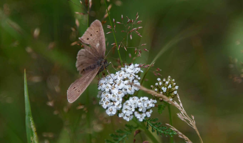 коровка, божья, красота, природы, макросъемке, бабочки, макро, цитата, сообщения, galche, красивое, times,