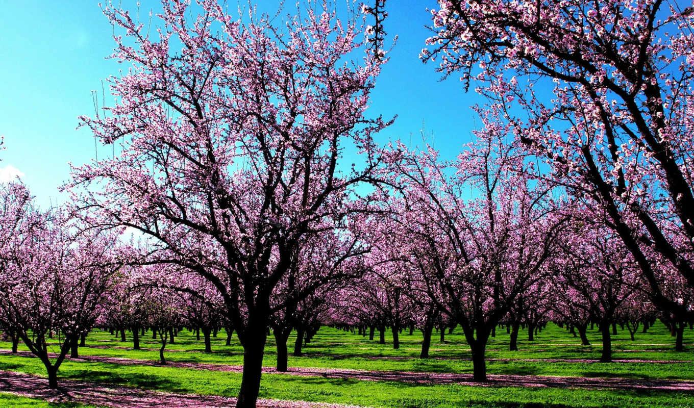 года, времена, весна, коллекция, деревя,