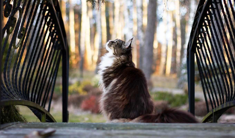 кот, дорогой, кресло, хороший, narrow, karolina, windsor