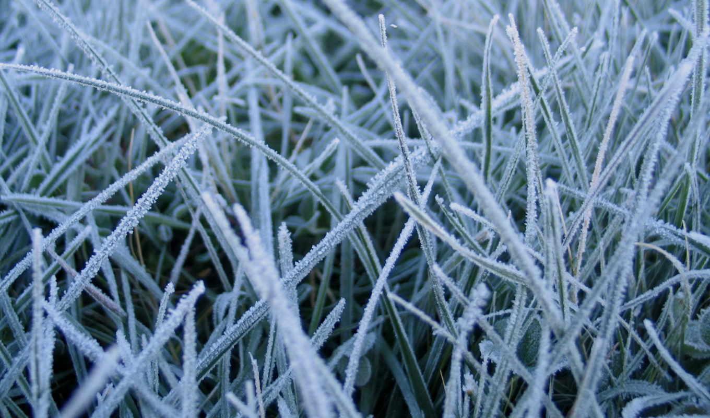 grass, wallpaper, wallpapers, картинка, абстракция, красочно, frosted, необычно, замёрзшая, трава, nature, природа, hd,