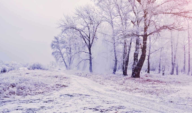 деревя, снег, zima, высоком, качестве,