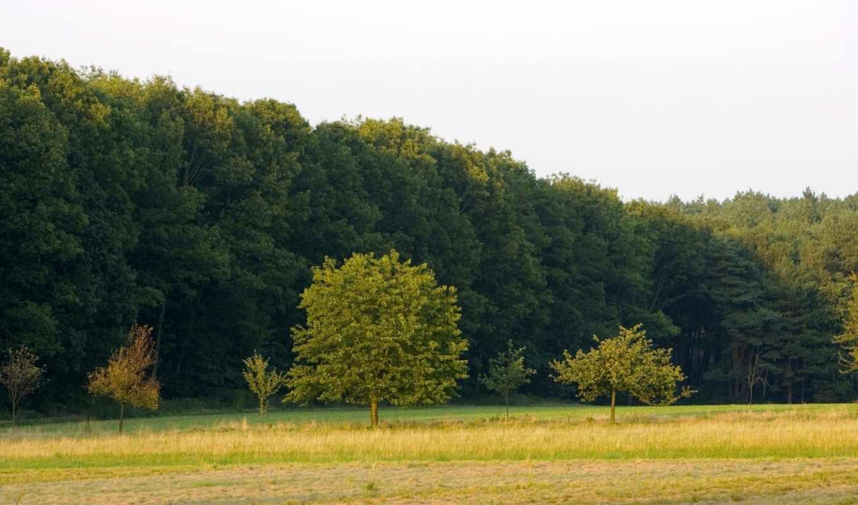 деревня, picturesque, природа, леса, trees, лес, красивые, коттедж, купить, площадь,